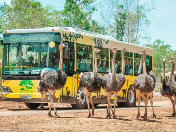 Vinpear safari Phú Quốc bàn đạp đẩy mạnh ngành du lịch Phú Quốc