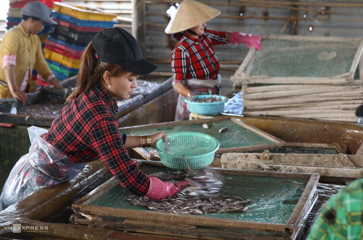Những công nhân đang xếp cá để luộc